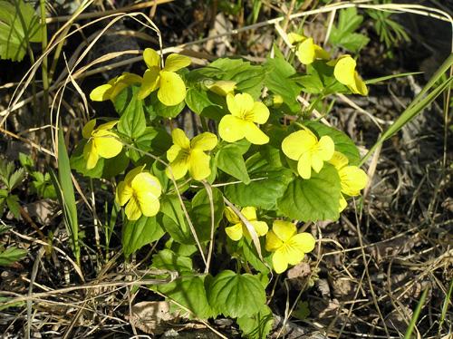 Цветы Игарки