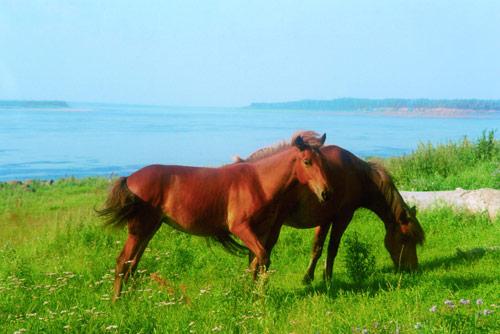Виктор Астафьев: «Домашнее животное» и «Старая лошадь»