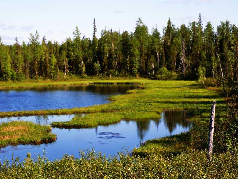 Как найти «Васюткино озеро»?