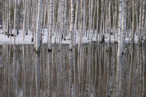 Ариадна Эфрон: горностаевая весна…